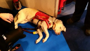 A medical assistance dog
